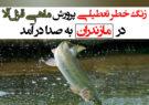 زنگ خطر تعطیلی پرورش ماهی قزلآلا در مازندران به صدا در آمد