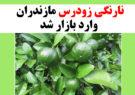 نارنگی زودرس مازندران وارد بازار شد