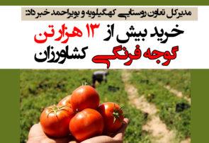 خرید بیش از ۱۳ هزار تن گوجه فرنگی کشاورزان