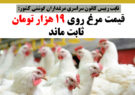 قیمت مرغ روی ۱۹ هزار تومان ثابت ماند