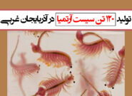 تولید ۱۲۰ تن سیست آرتمیا در آذربایجان غربی