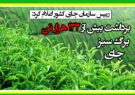 برداشت بیش از ۱۳۲ هزار تن برگ سبز چای