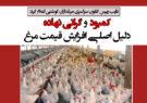 کمبود و گرانی نهاده دلیل اصلی افزایش قیمت مرغ