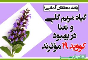 گیاه مریم گلی و نعنا در بهبود کووید ۱۹ مؤثرند