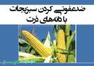 ضدعفونی کردن سبزیجات با دانههای ذرت