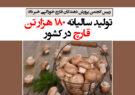 تولید سالیانه ۱۸۰ هزار تن قارچ در کشور