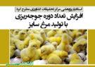 افزایش تعداد دوره جوجهریزی با تولید مرغ سایز