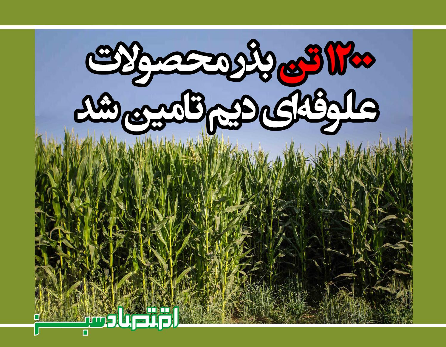 ۱۲۰۰ تن بذر محصولات علوفهای دیم تامین شد