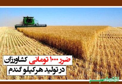 ضرر ۱۰۰۰ تومانی کشاورزان در تولید هر کیلو گندم