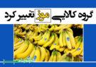 گروه کالایی موز تغییر کرد/ واردات آزاد میشود