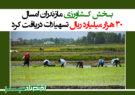 بخش کشاورزی مازندران امسال ۳۰ هزار میلیارد ریال تسهیلات دریافت کرد