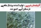 آذربایجانغربی، تولیدکننده پیشتاز ماهی در منابع آبی کشور شد