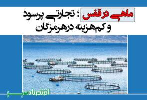 ماهی در قفس؛ تجارتی پرسود و کمهزینه درهرمزگان
