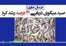 صید میگوی دریایی ۴۱ درصد رشد کرد