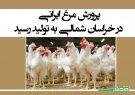 پرورش مرغ ایرانی در خراسان شمالی به تولید رسید