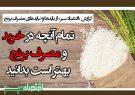 تمام آنچه در خرید و مصرف برنج بهتر است بدانید
